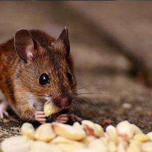 instalaciones roedores
